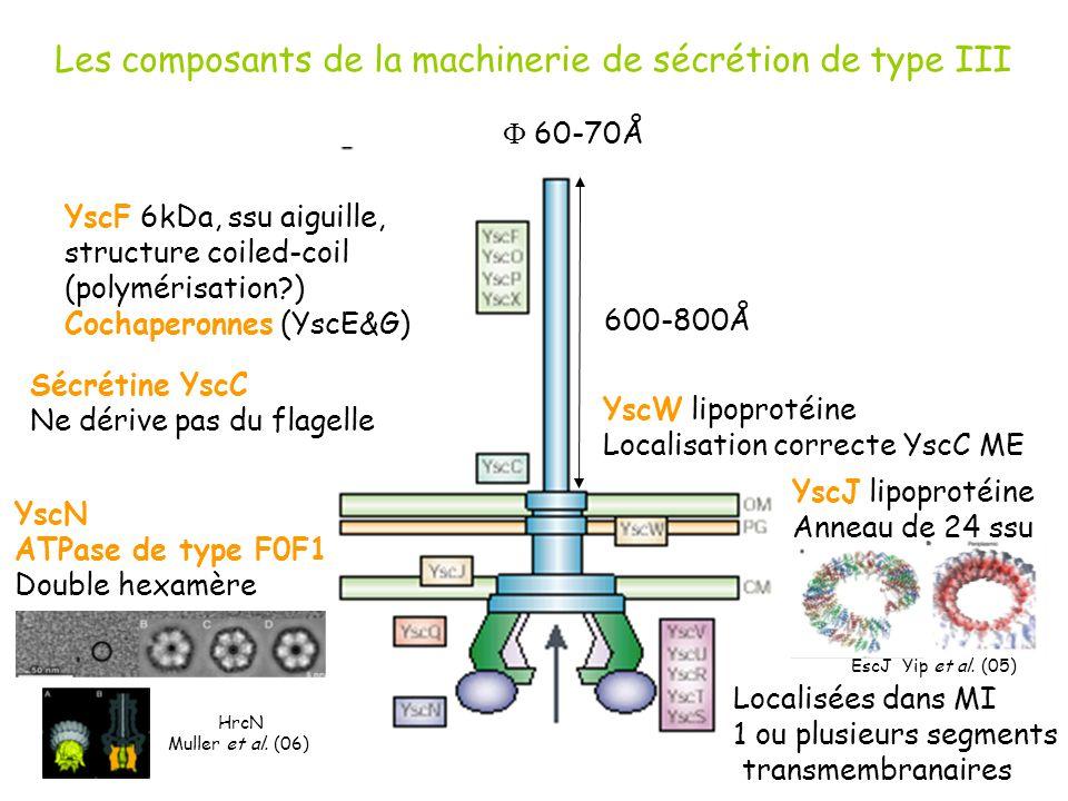 Les composants de la machinerie de sécrétion de type III