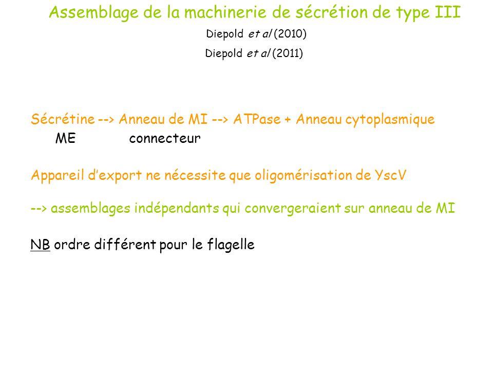 Assemblage de la machinerie de sécrétion de type III Diepold et al (2010) Diepold et al (2011)