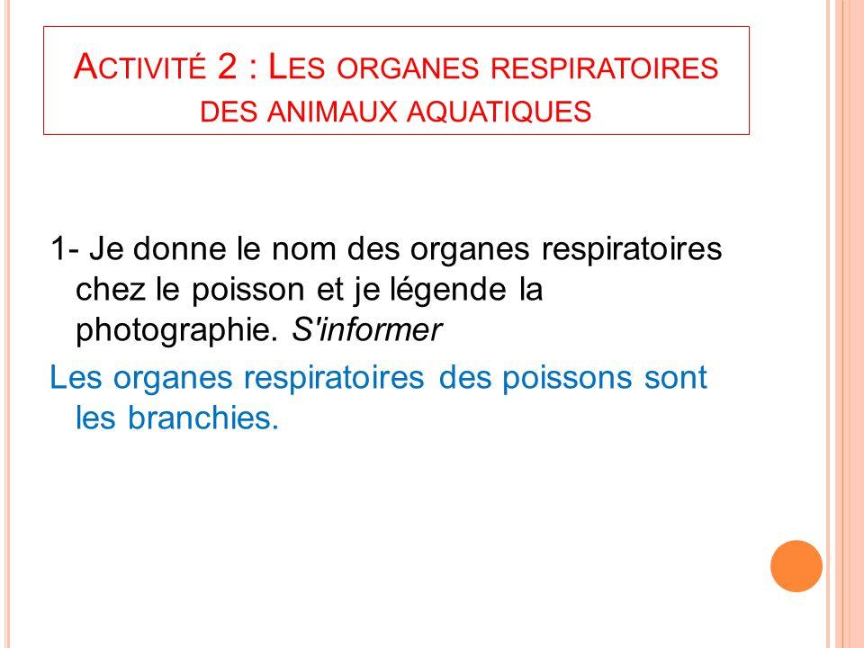 Activité 2 : Les organes respiratoires des animaux aquatiques
