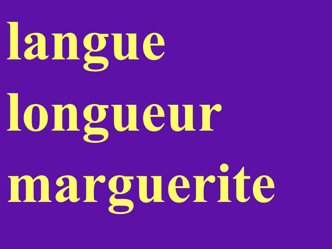 langue longueur marguerite