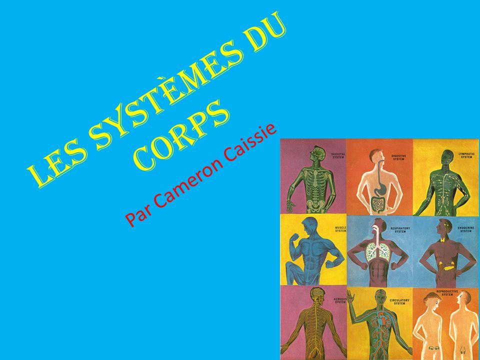 Les systèmes du corps Par Cameron Caissie
