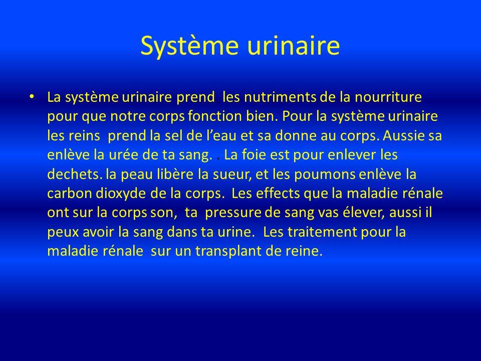 Système urinaire