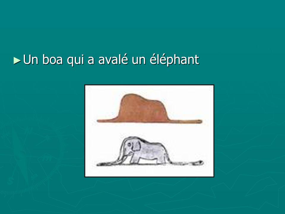 Un boa qui a avalé un éléphant