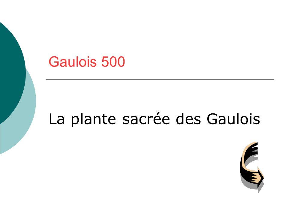 La plante sacrée des Gaulois
