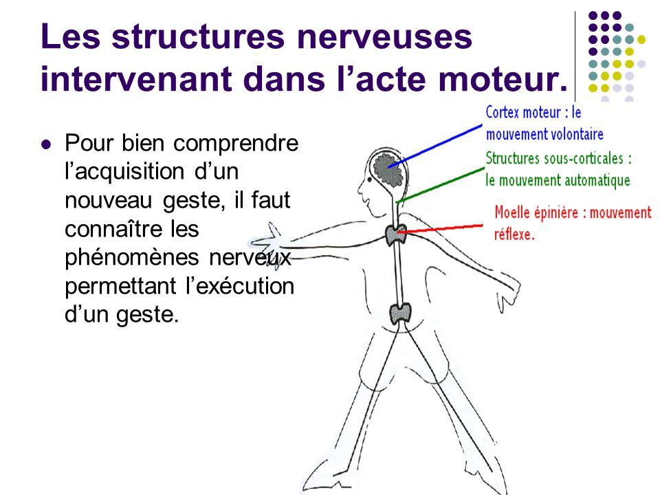 Les structures nerveuses intervenant dans l'acte moteur.