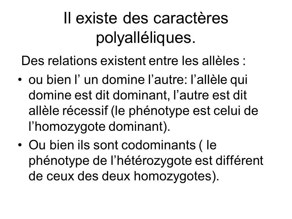 Il existe des caractères polyalléliques.