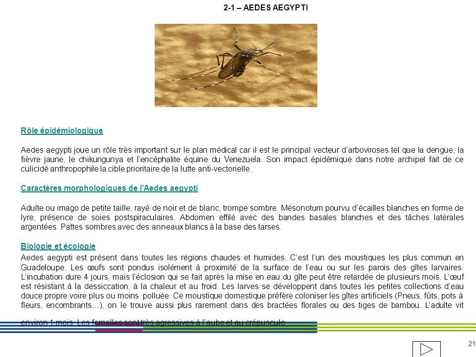 2-1 – AEDES AEGYPTI Rôle épidémiologique.