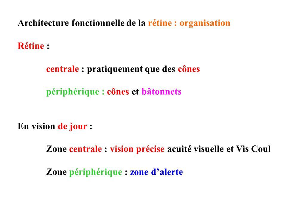 Architecture fonctionnelle de la rétine : organisation