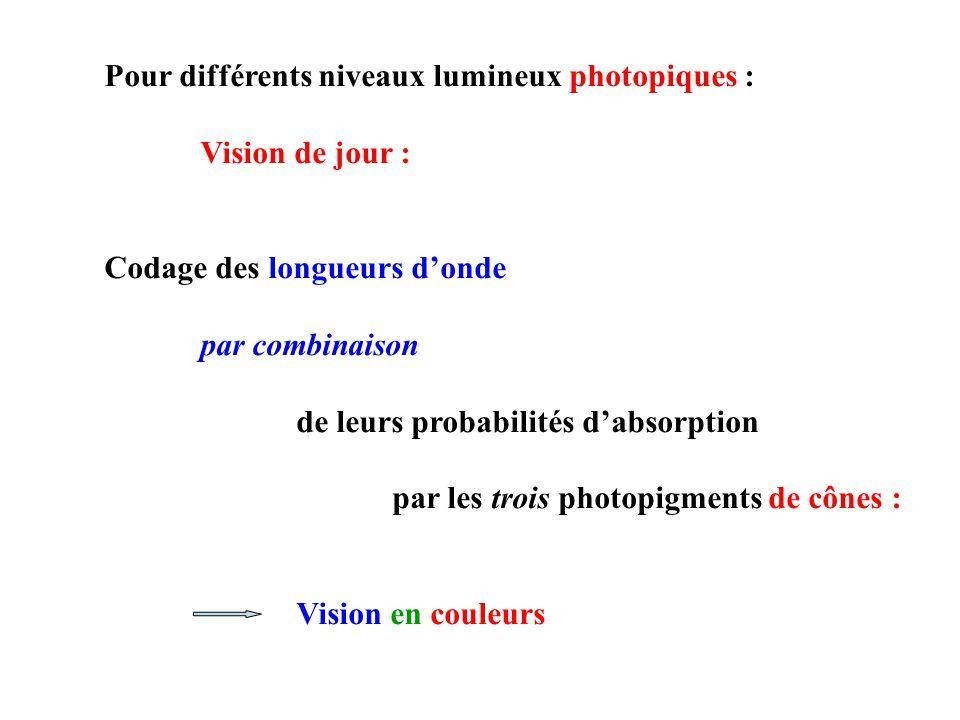 Pour différents niveaux lumineux photopiques :