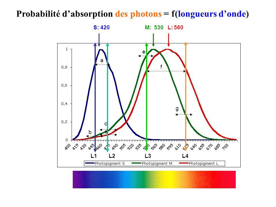 Probabilité d'absorption des photons = f(longueurs d'onde)