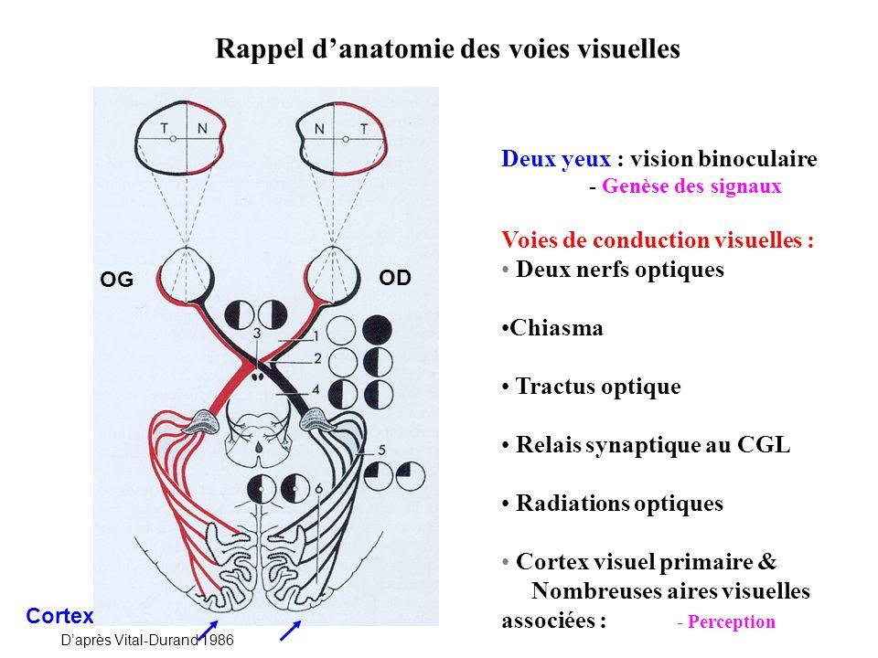 Rappel d'anatomie des voies visuelles