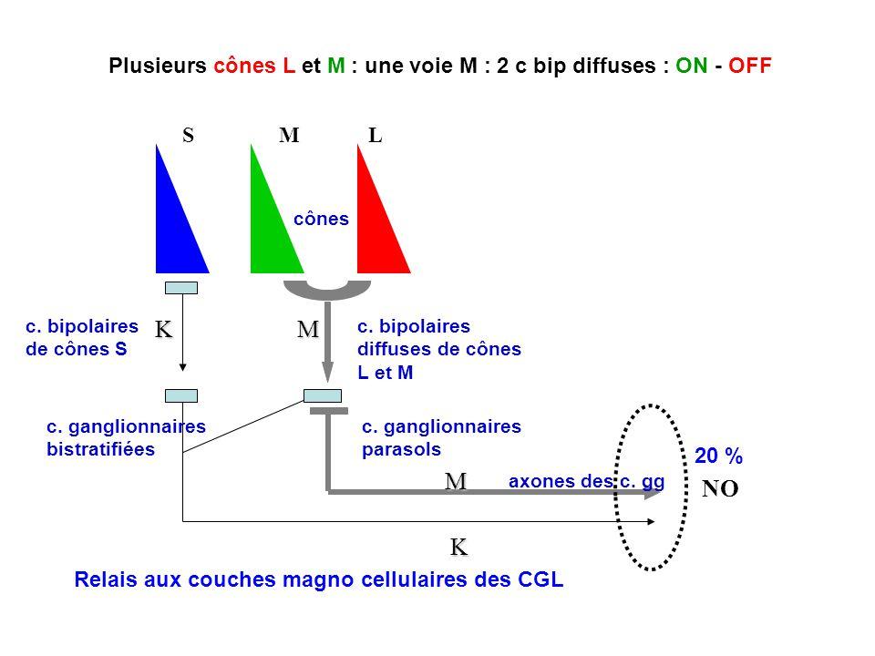 K NO S. M. L. c. bipolaires. de cônes S. c. ganglionnaires. bistratifiées. cônes. axones des c. gg.
