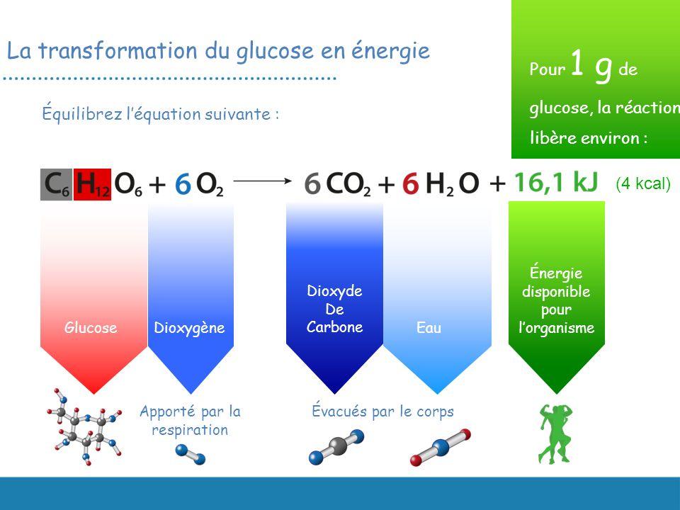 La transformation du glucose en énergie