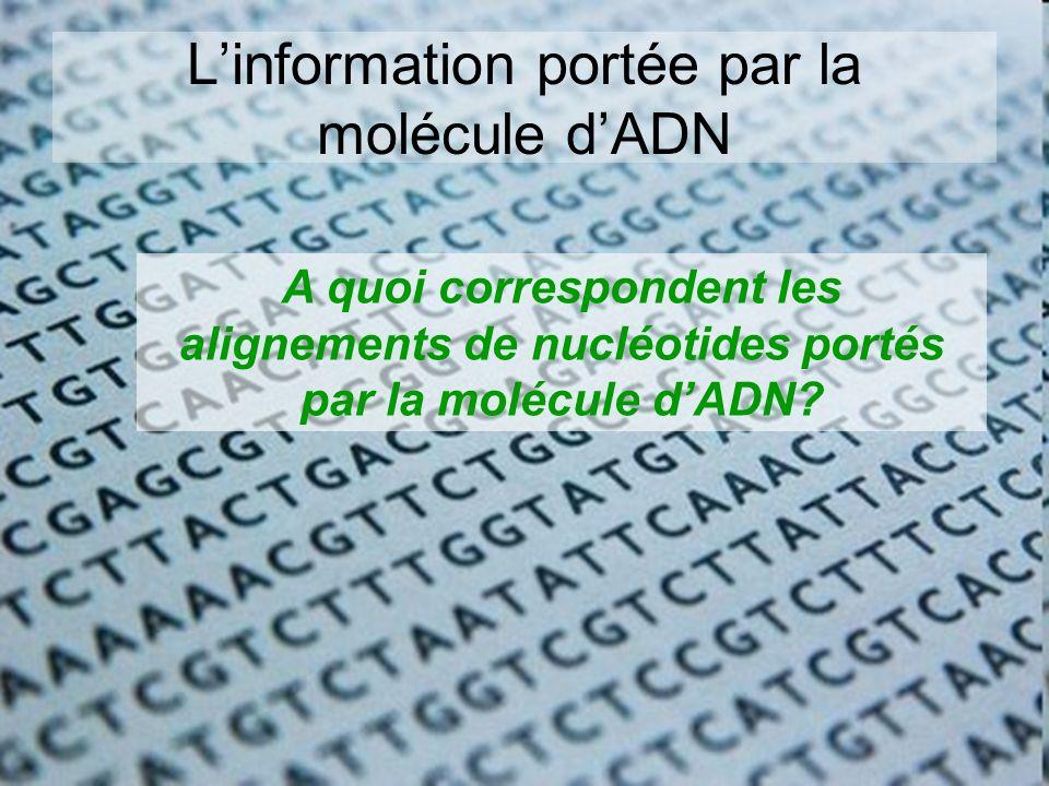 L'information portée par la molécule d'ADN