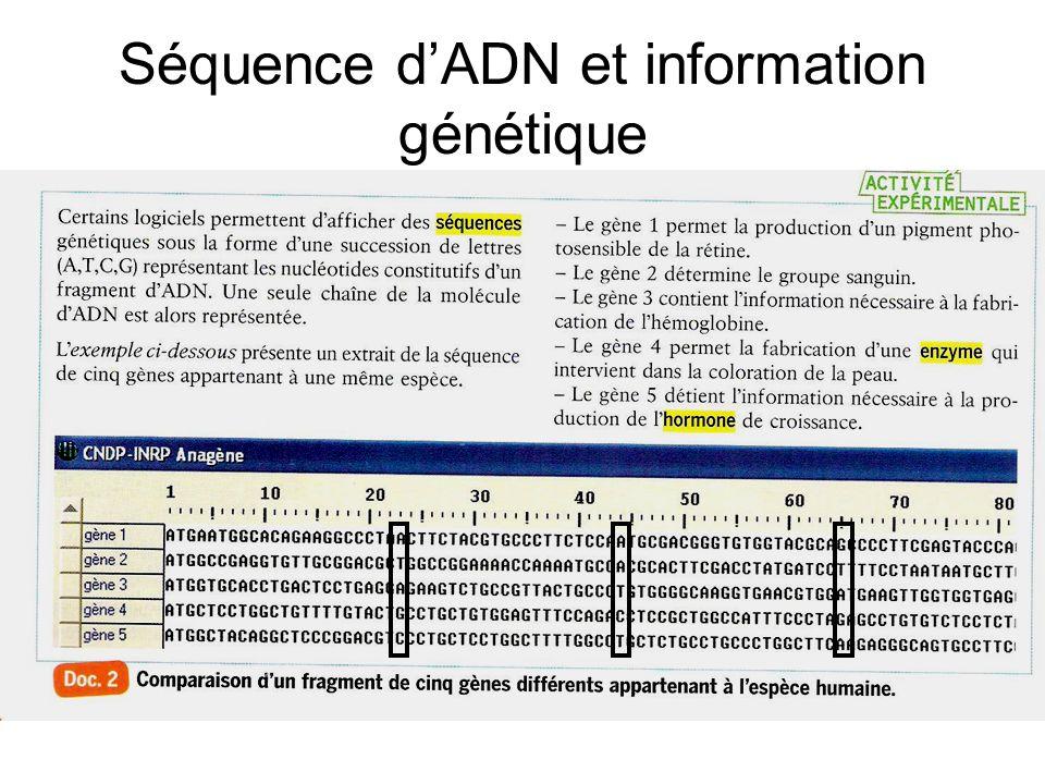 Séquence d'ADN et information génétique