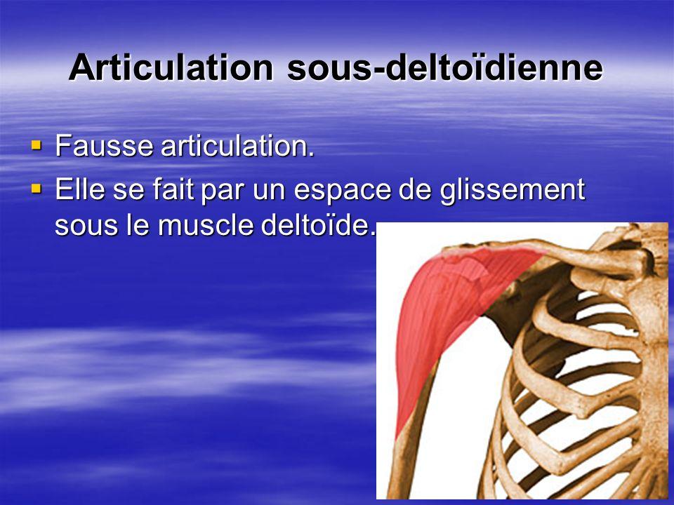Articulation sous-deltoïdienne