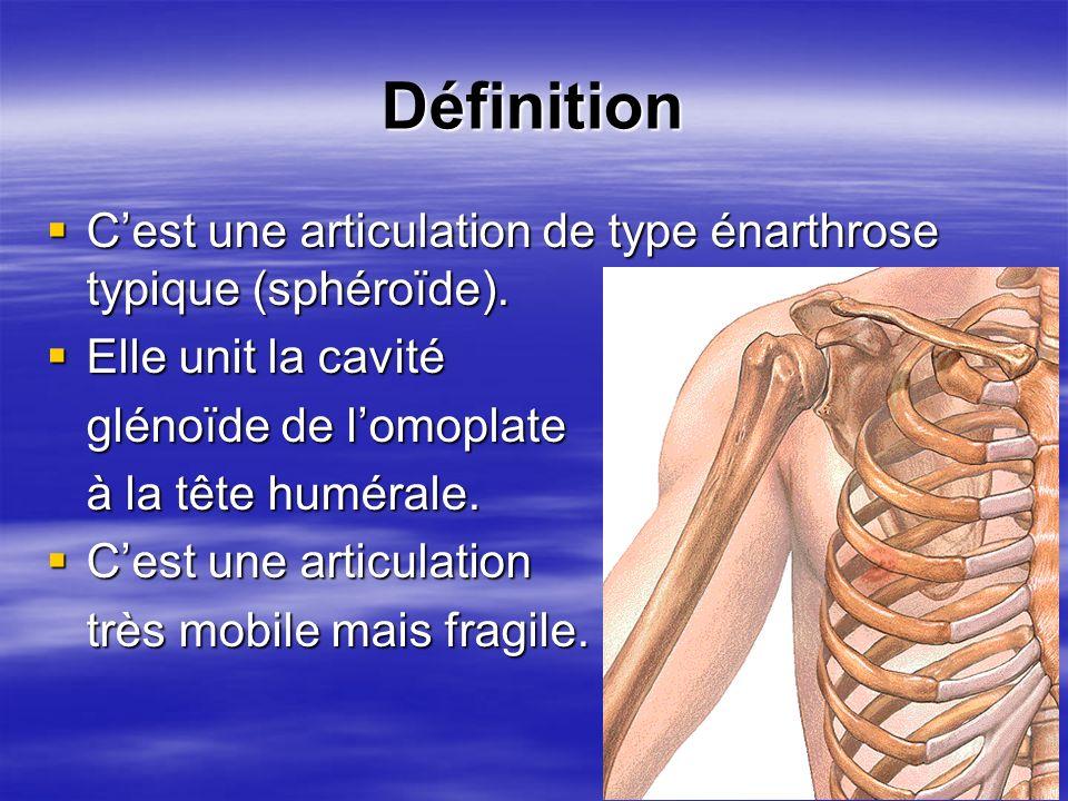 Définition C'est une articulation de type énarthrose typique (sphéroïde). Elle unit la cavité. glénoïde de l'omoplate.