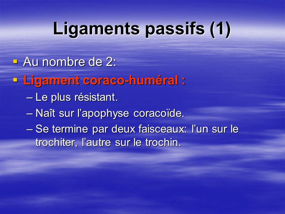 Ligaments passifs (1) Au nombre de 2: Ligament coraco-huméral :