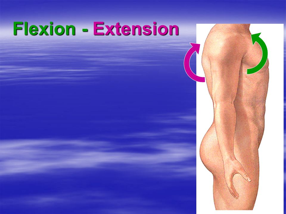 Flexion - Extension