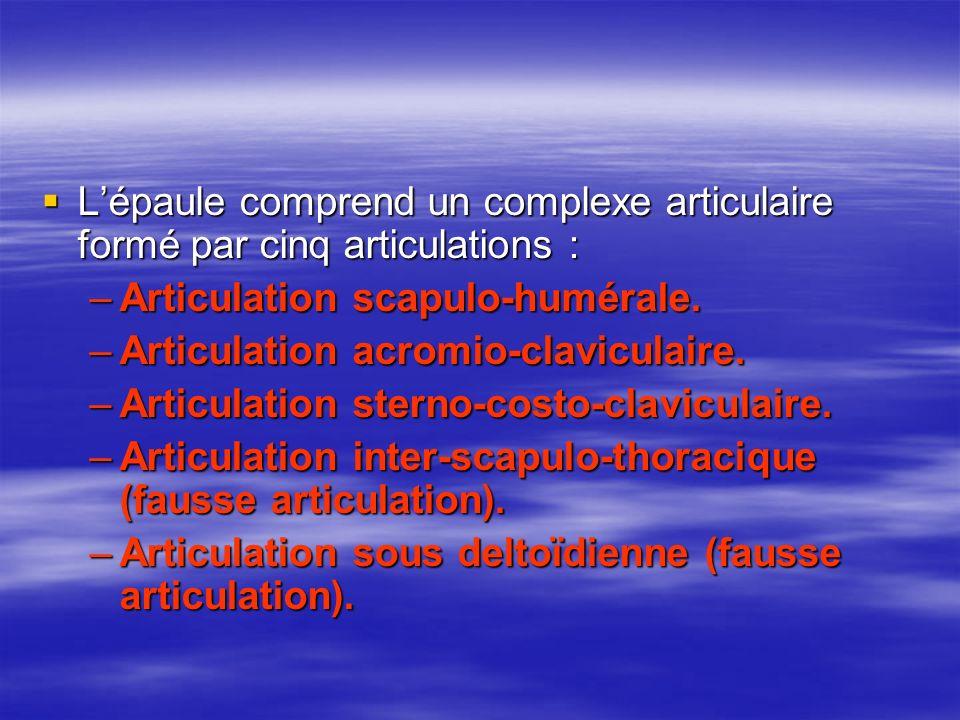 L'épaule comprend un complexe articulaire formé par cinq articulations :