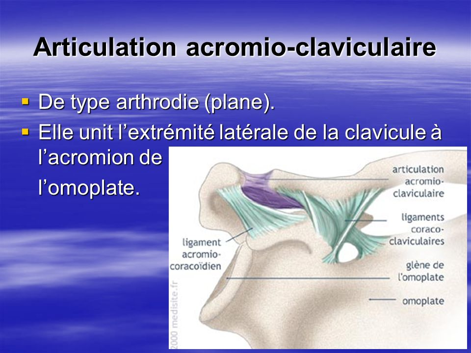 Articulation acromio-claviculaire