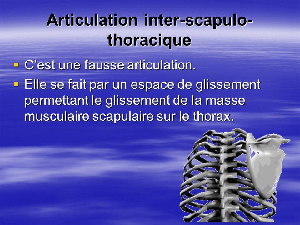 Articulation inter-scapulo-thoracique