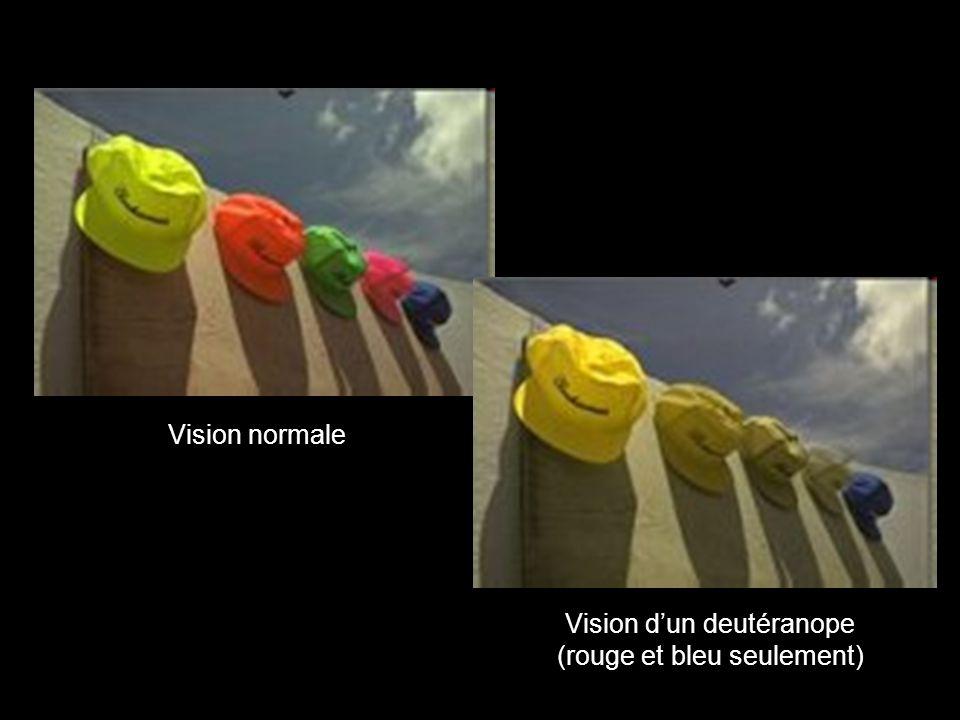 Vision d'un deutéranope (rouge et bleu seulement)