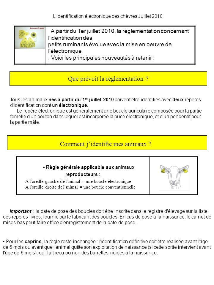 L identification électronique des chèvres Juillet 2010