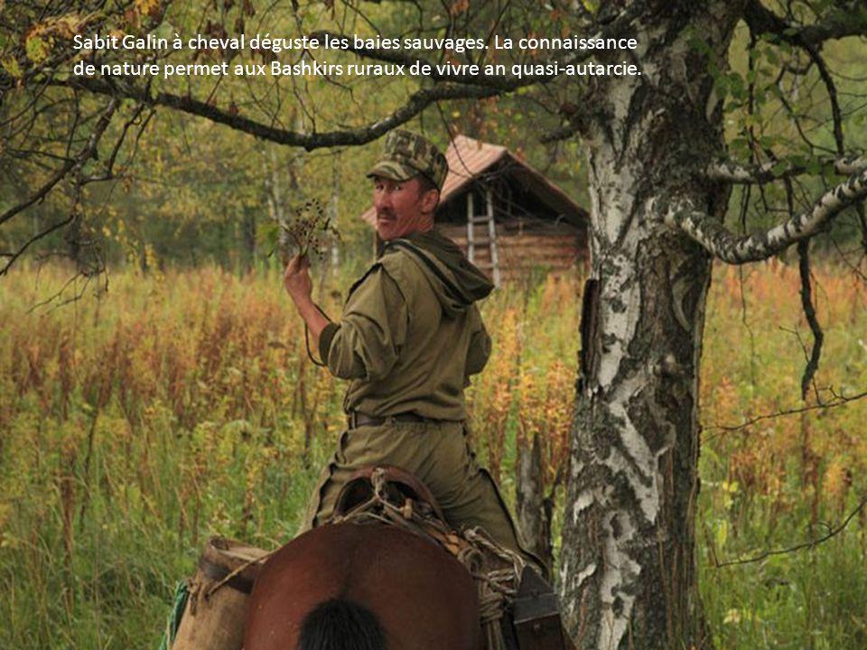 Sabit Galin à cheval déguste les baies sauvages