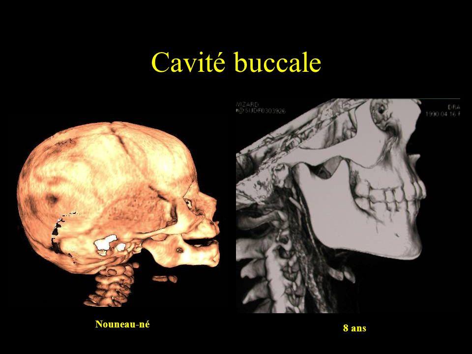 Cavité buccale Nouneau-né 8 ans