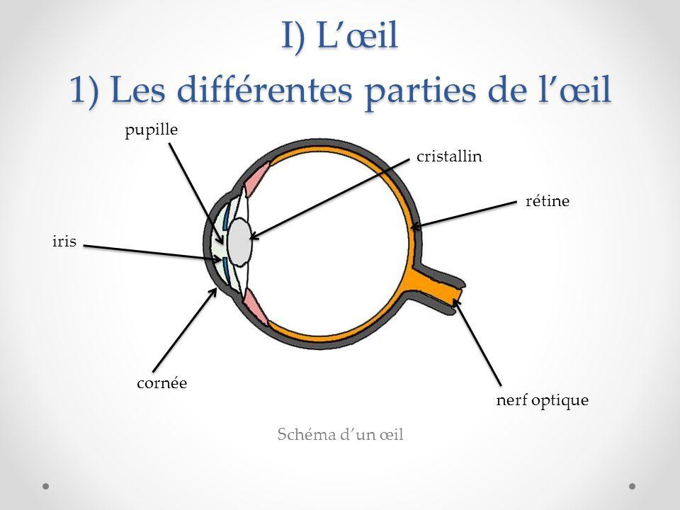 I) L'œil 1) Les différentes parties de l'œil