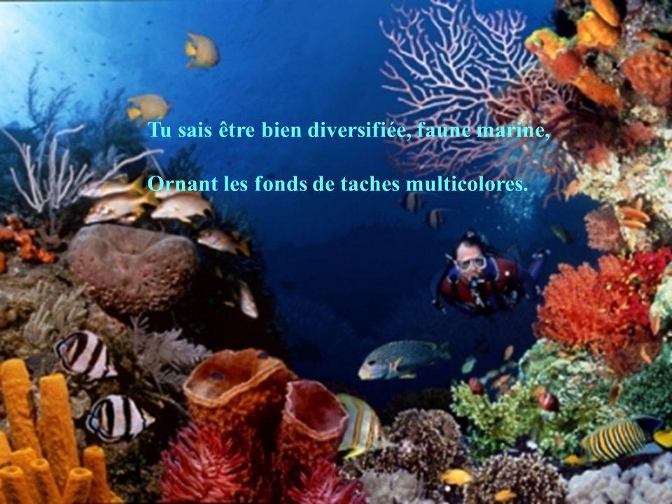 Tu sais être bien diversifiée, faune marine,