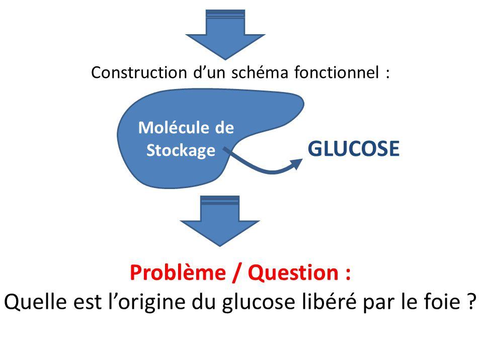 Quelle est l'origine du glucose libéré par le foie