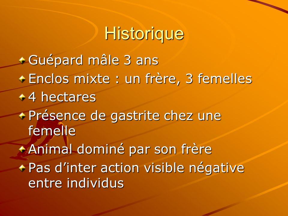 Historique Guépard mâle 3 ans Enclos mixte : un frère, 3 femelles