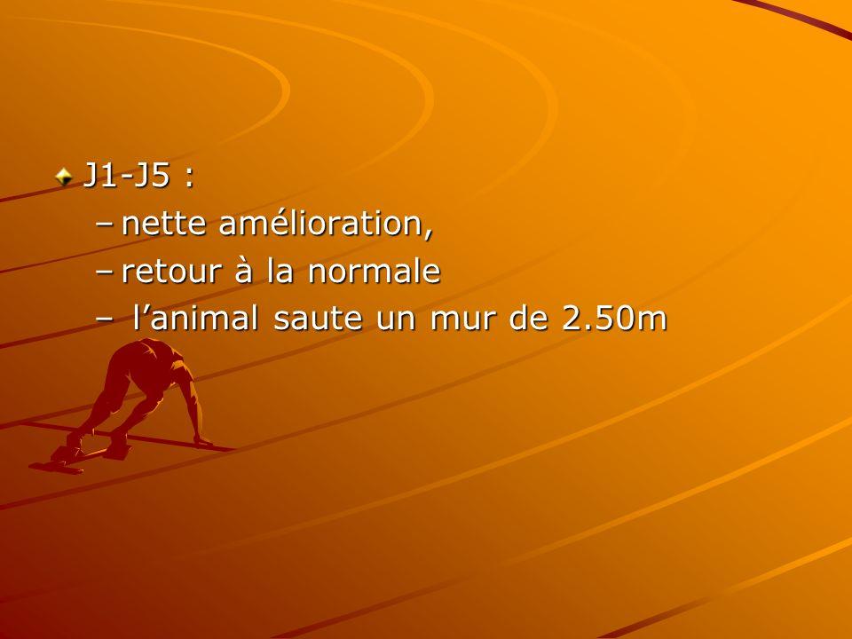 J1-J5 : nette amélioration, retour à la normale l'animal saute un mur de 2.50m