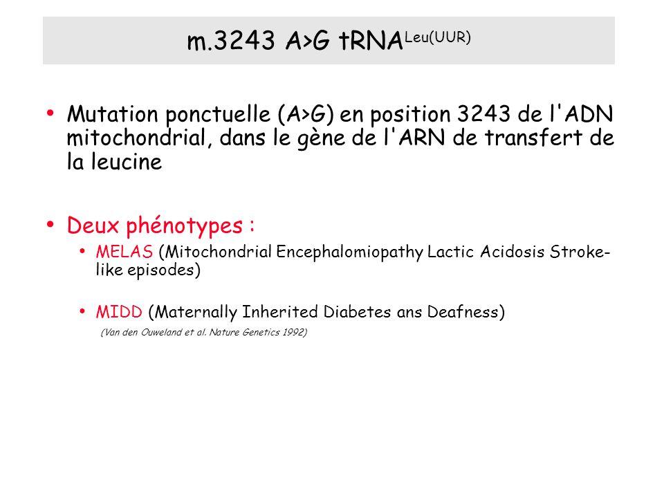 m.3243 A>G tRNALeu(UUR) Mutation ponctuelle (A>G) en position 3243 de l ADN mitochondrial, dans le gène de l ARN de transfert de la leucine.