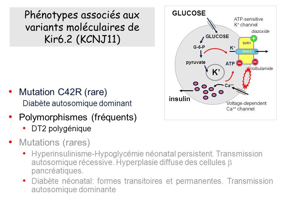 Phénotypes associés aux variants moléculaires de Kir6.2 (KCNJ11)