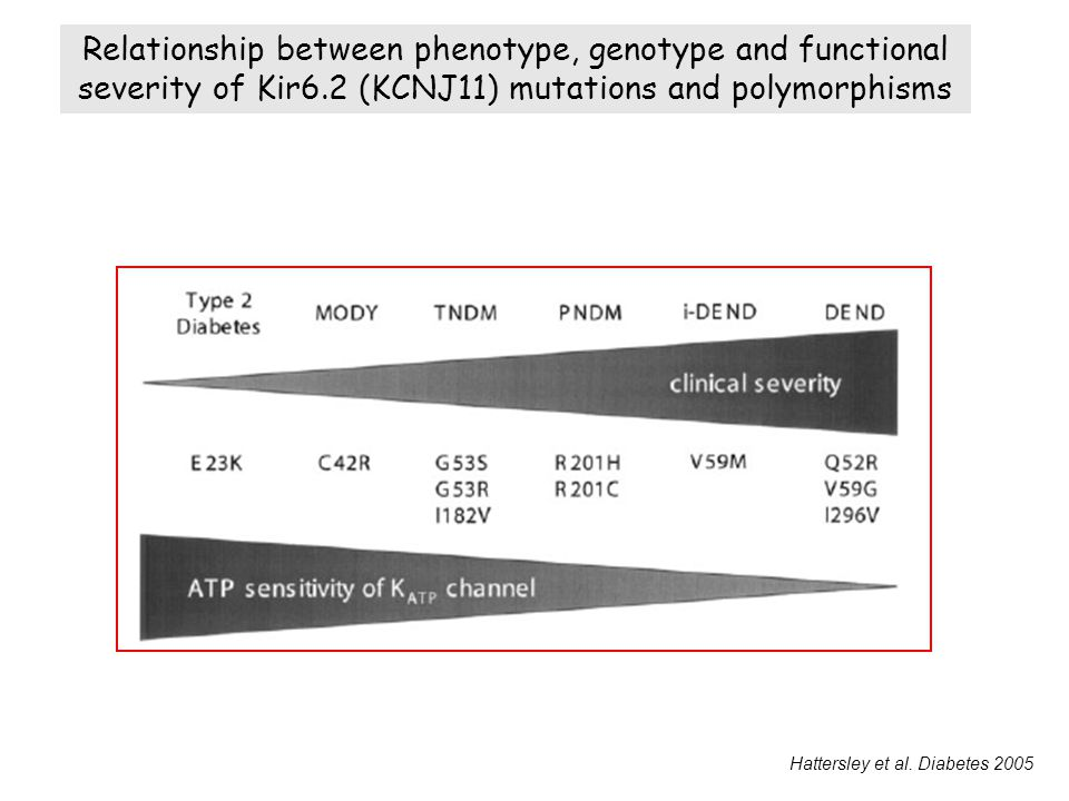 Relationship between phenotype, genotype and functional severity of Kir6.2 (KCNJ11) mutations and polymorphisms