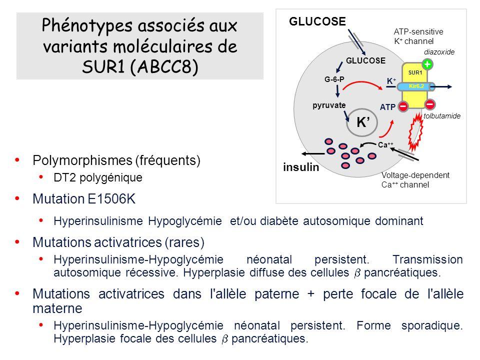 Phénotypes associés aux variants moléculaires de SUR1 (ABCC8)
