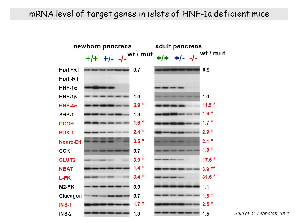 mRNA level of target genes in islets of HNF-1a deficient mice
