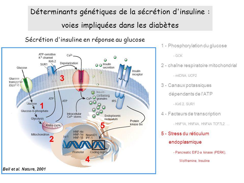 3 1 5 2 4 Déterminants génétiques de la sécrétion d insuline :