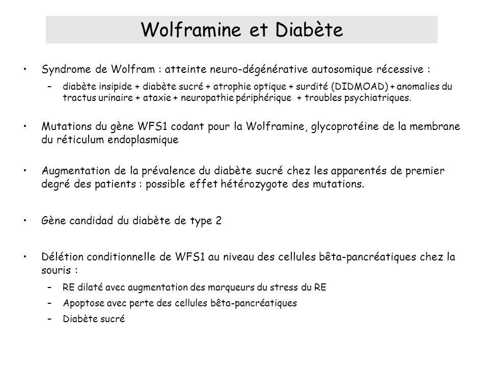 Wolframine et Diabète Syndrome de Wolfram : atteinte neuro-dégénérative autosomique récessive :