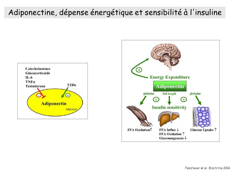 Adiponectine, dépense énergétique et sensibilité à l insuline