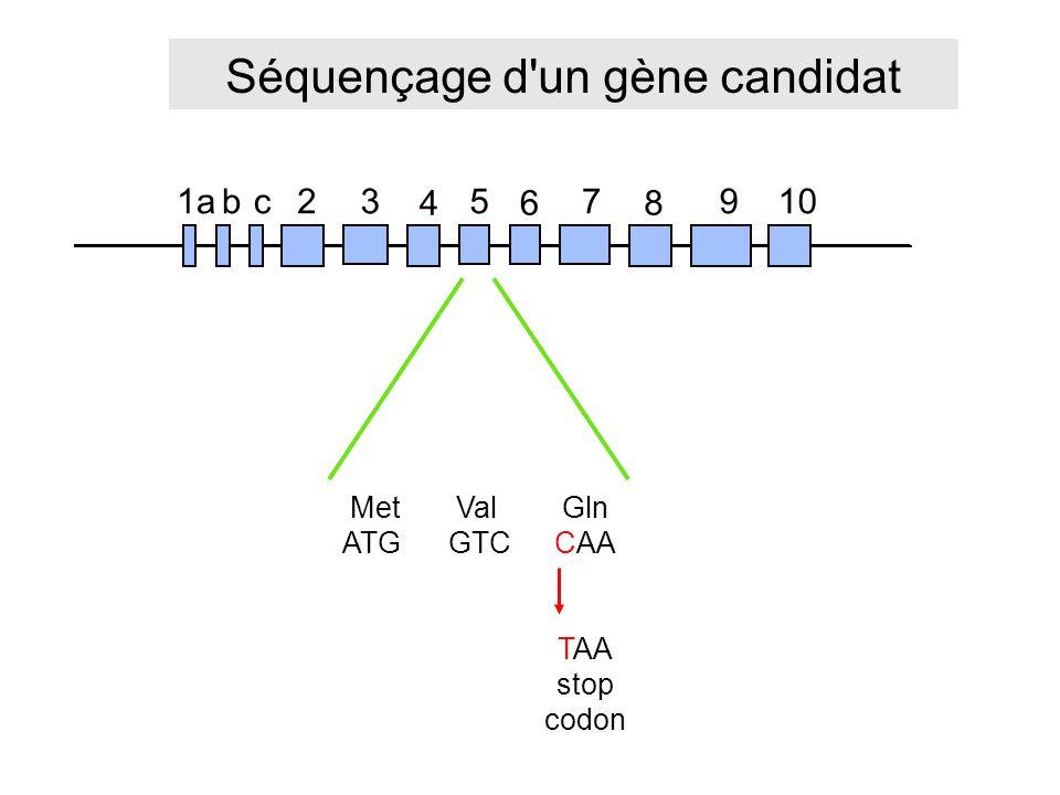 Séquençage d un gène candidat