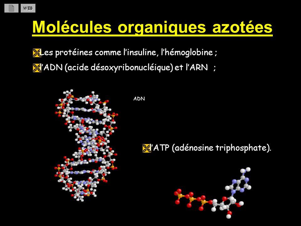 Molécules organiques azotées