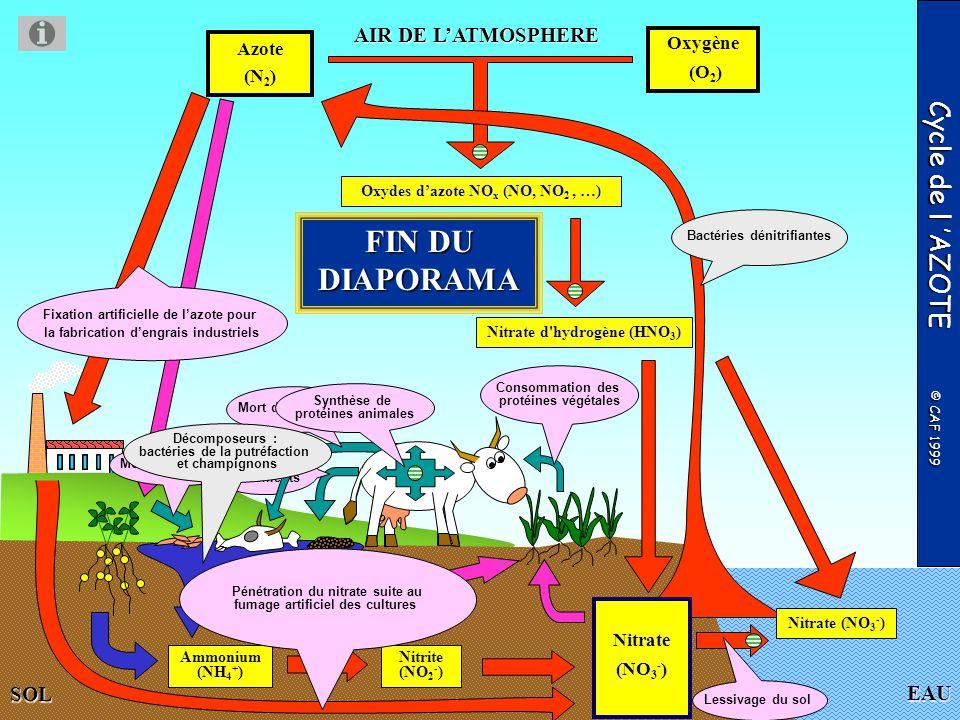 FIN DU DIAPORAMA Cycle de l 'AZOTE © CAF 1999 AIR DE L'ATMOSPHERE EAU