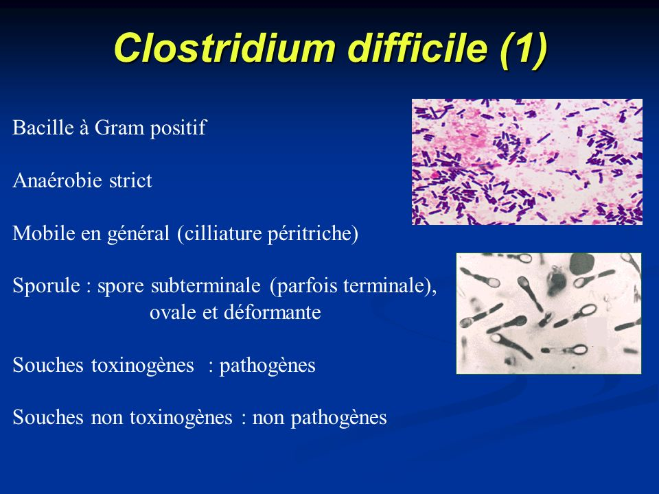 Clostridium difficile (1)