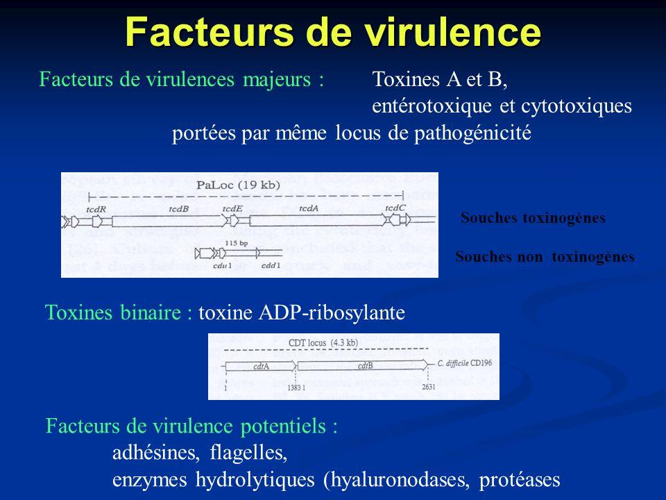 Facteurs de virulence Facteurs de virulences majeurs : Toxines A et B,