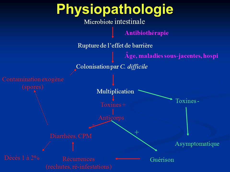 Physiopathologie - + Microbiote intestinale Antibiothérapie