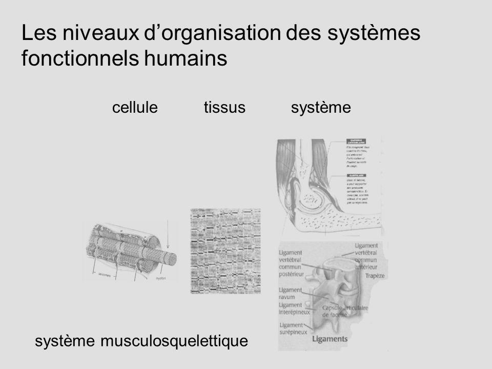 Les niveaux d'organisation des systèmes fonctionnels humains